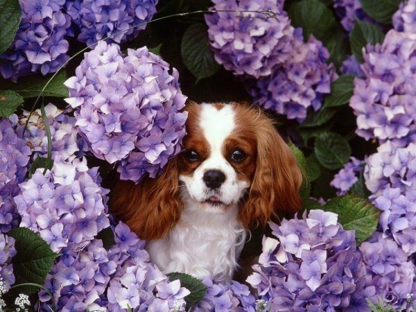 Я похожа на цветочек?