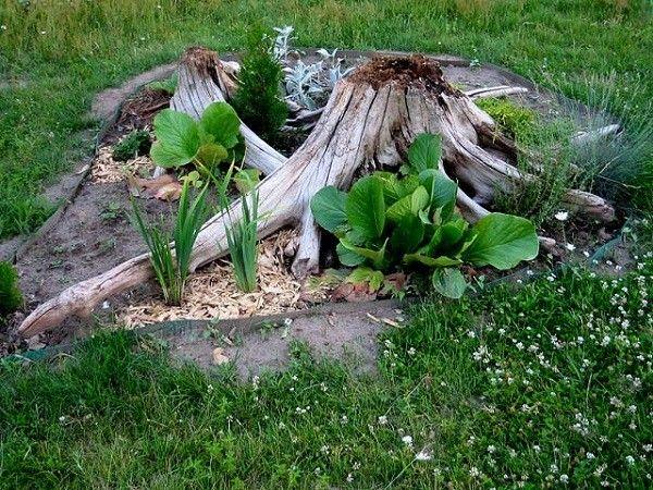 13. Избавиться от сорняка. Полить растение уксусом, чтобы он проник к корням. Через пару часов сорняк можно легко удалить с грядки.
