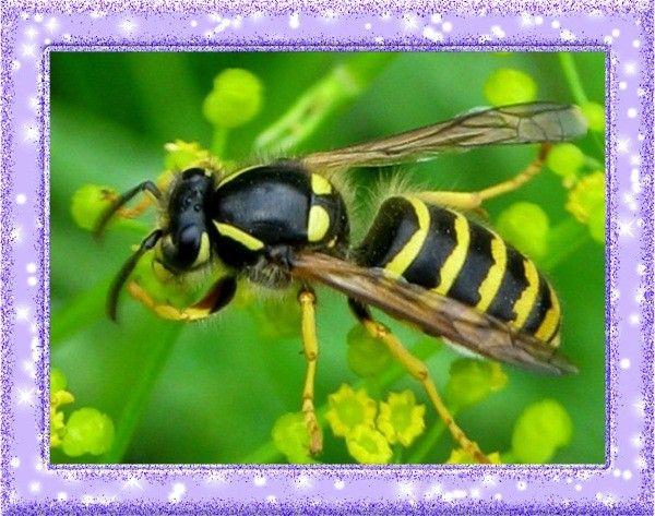 11. Противоядие укусам насекомых. Протрите место, куда ужалила оса или пчела лимонным соком, чтобы облегчить боль.