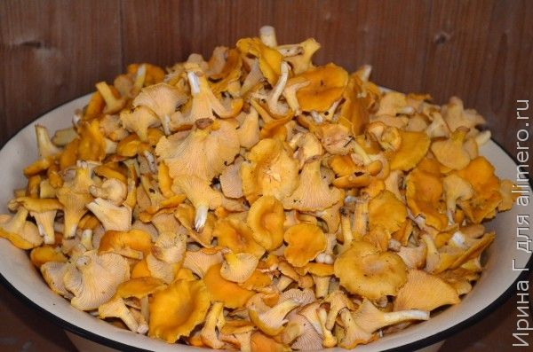 картофель тушеный с лисичками рецепт