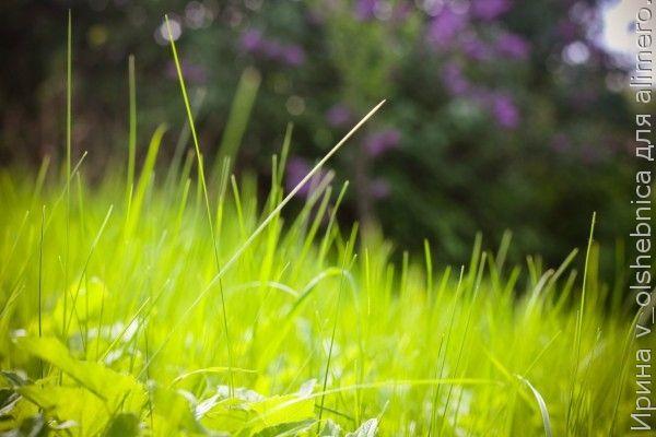 сочная трава фото