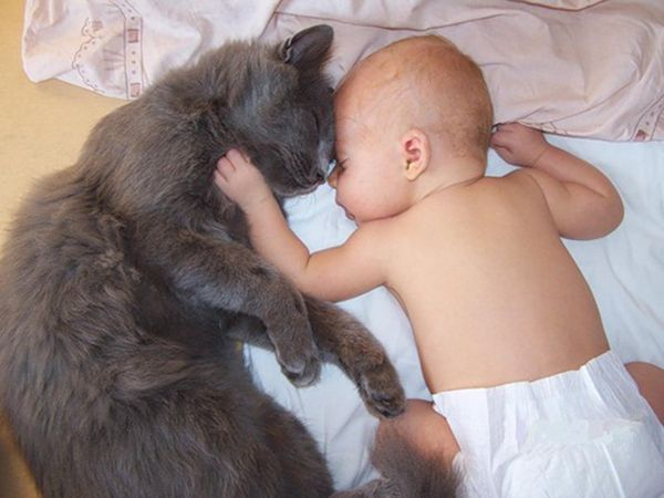 30 забавных фото детей с кошками