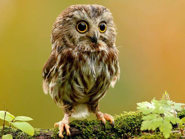 Удивительно, но все птицы моргают нижним веком. Только есть исключение: сова. Она моргает верхним.
