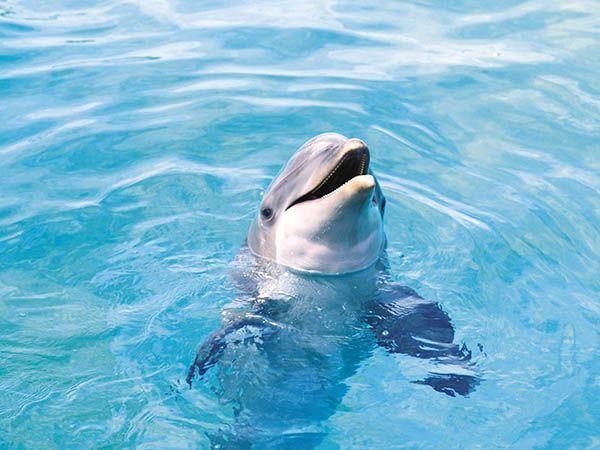 Дельфины спят с одним открытым глазом!
