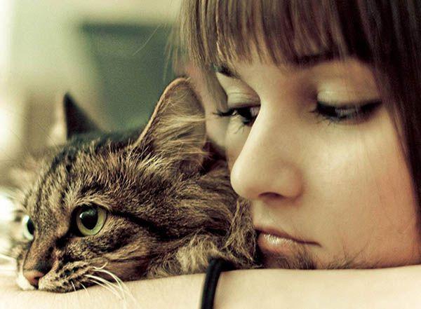 «Время, проведенное с кошкой, никогда не потеряно даром».  Сидони-Габриэль Колетт