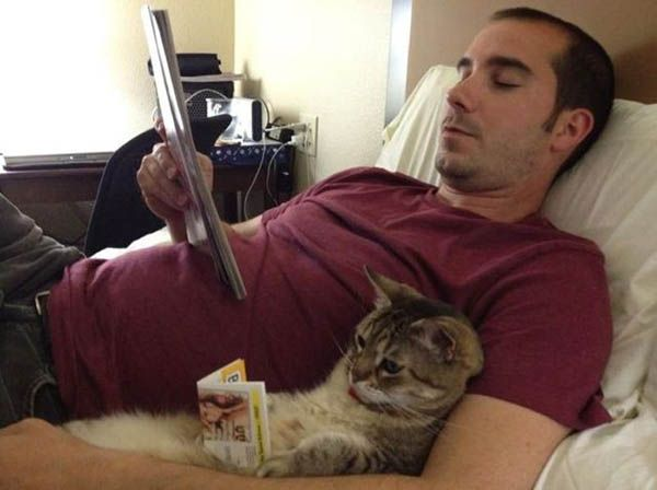 «Люди держат собак, а кошки держат людей — как полезных домашних животных». Джордж Майкс