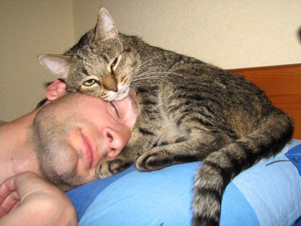 «Кошка будет к вам очень благосклонна, если только вы будете знать своё место». Пол Грэй