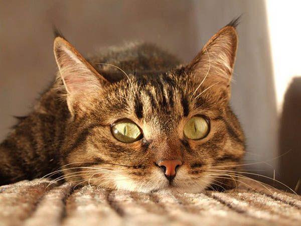 «Меня всегда пробирает дрожь, когда я вижу кошку, видящую то, чего не вижу я». Адриано Баккелла