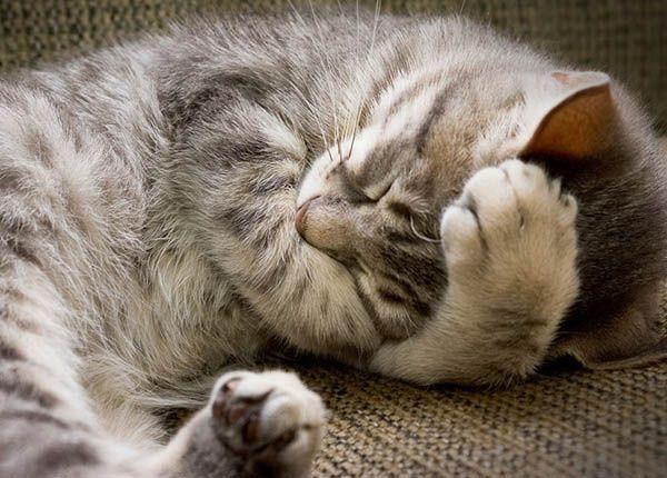 «Кошки занимают пустые уголки Вселенной — они самые уютные». Адриано Баккелла