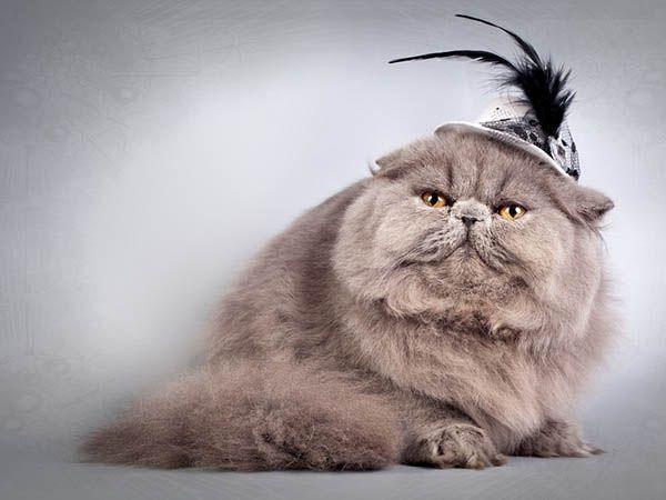 «Мы все живем, глубоко скрывая наши истинные желания. И только кошкам хватает смелости жить в свое удовольствие». Джим Дэвис