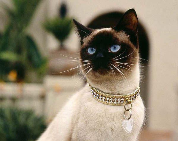 «Собаки завоевывают ваше расположение, а вы – кошкино». Джордж Микиш