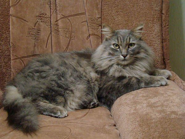 «Кошки - это маленькие фабрики по производству шерсти». Джим Дэвис