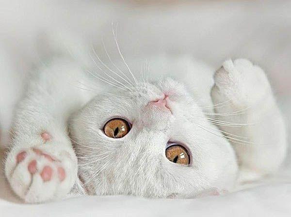 «Обычных кошек не бывает». Сидони-Габриэль Колетт