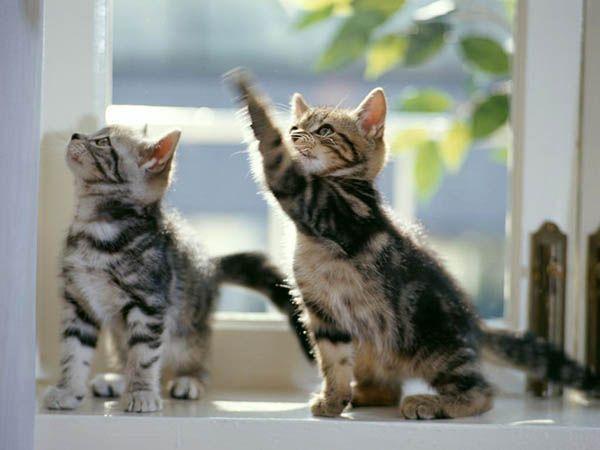«Земля чудесами богата, но лучшее чудо на свете – смотреть, как играют котята и учатся жизни при этом». Эдит Каррингтон