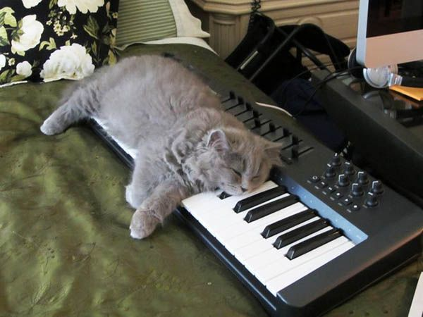«Идеал спокойствия воплощён в фигуре сидящего кота». Жюль Рейнард