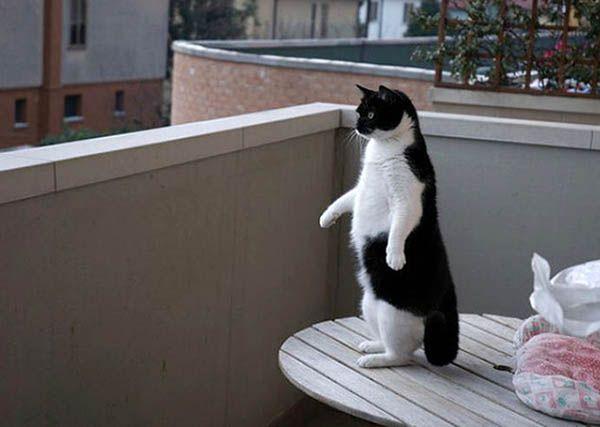«Кошка просто неспособна принять не изящную позу». Лилиан Джексон Браун