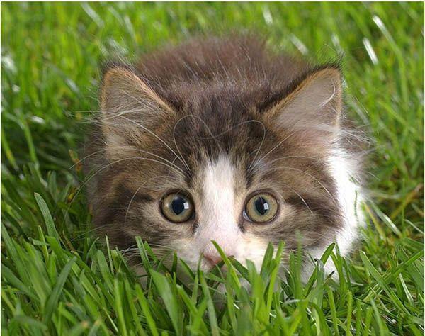 «Кошки выходят не на прогулку, а на разведку». Сидней Денхам