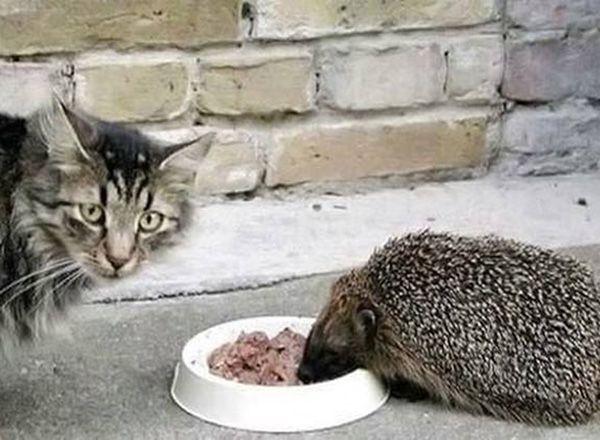 Кто это ест из моей тарелки?!