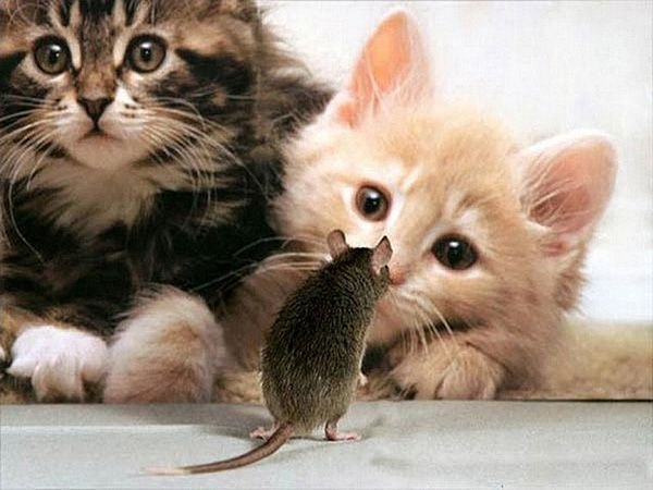 Смотри, сам маленький, а усы какие длинные!