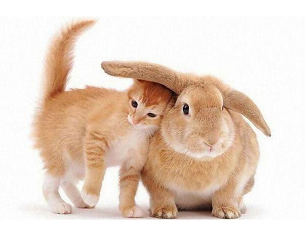Скажи на ушко, что любишь меня!)))