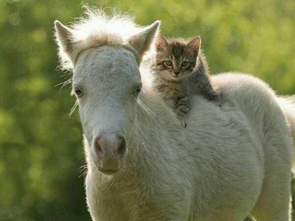 До чего же хочется, братцы, на живой лошадке покататься!