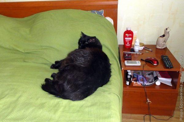 черный кот фото