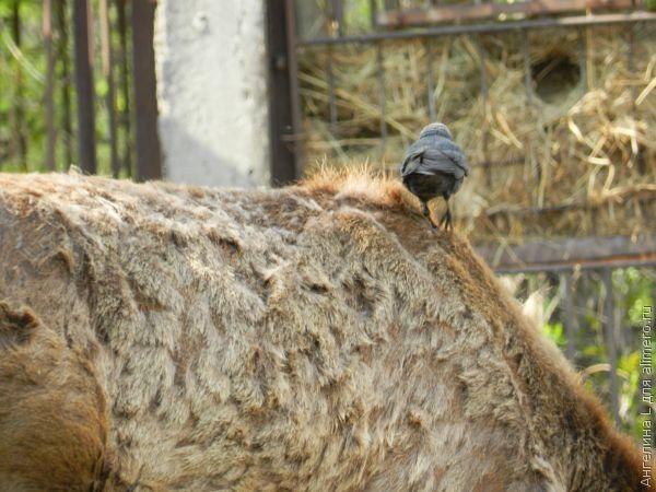 Мое первое (сознательное) посещение зоопарка
