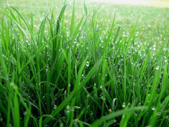 Свежие пятна от травы (зелени) можно удалить водкой, а лучше всего денатуратом. Можно также их снять раствором поваренной соли (1 чайная ложка на 1/2 стакана теплой воды). После удаления пятна ткань ополаскивается в теплой воде.