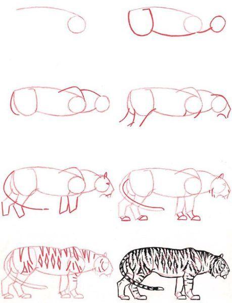 Тигра нарисовать немного сложнее. Округлые части тела дополняются зарисовкой полосатого раскраса.