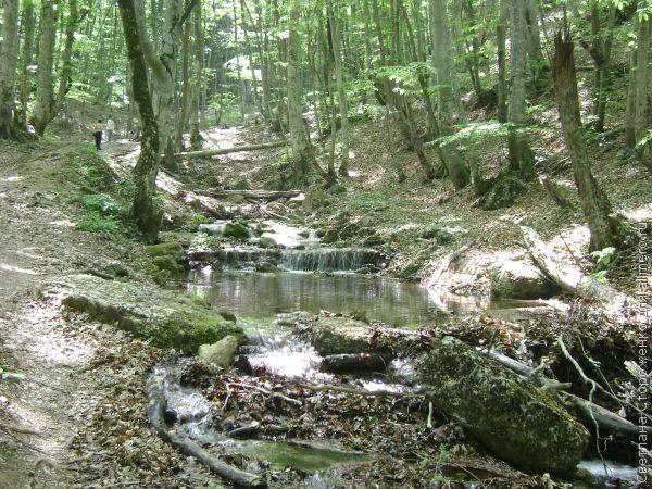 лес река