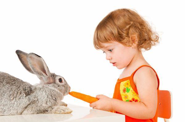 5. Морковка для зайчика. Разложите на полу морковку и картошку (игрушечную или настоящую) и посадите на детский столик зайчика. Предложите малышу собрать для зайчика в огороде только морковку.