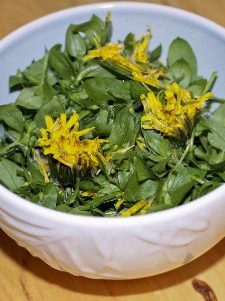 Одуванчик. Вкус цветов очень похож на каперсы. Его лепестки отлично подходят для приготовления мяса и рыбы, используются для ароматизации меда и приготовления ликеров, из цветков одуванчика варят варенье. Можно консервировать цветы и бутоны в оливковом масле, предварительно отварив их в воде с уксусом.