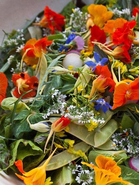 Настурция. Один из самых популярных съедобных цветов. Ее цветы характеризуются насыщенными оттенками. Имеют немного пряный аромат и сладковатый вкус с оттенком перца. Вы можете фаршировать цветы, добавлять в салаты. Очень хороша настурция в сочетании с мясом.