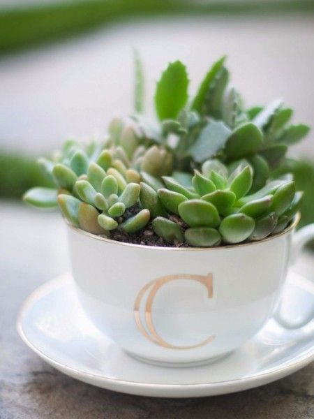 16. Суккуленты в чашке. Честно скажу, это мои любимые растения. О них очень легко заботиться. Поместите несколько штук в чашку и очаровательный подарок готов!