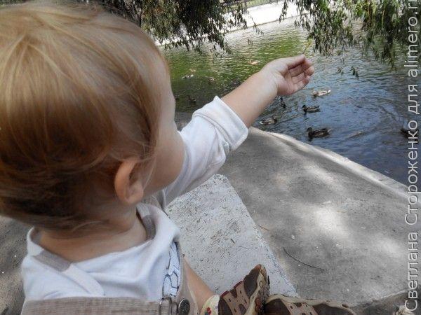 Ребенок кормит уток