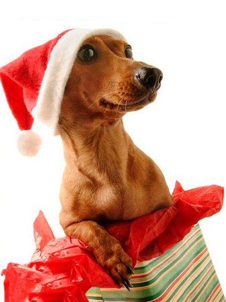 Собака смыслом жизни не является, но когда она есть, то жизнь приобретает особенный смысл!