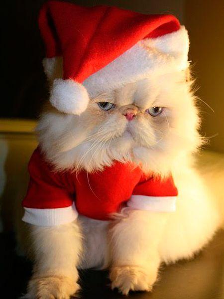 Зависть заполоняет все твое существо, когда собираясь на работу, ты видишь, как кошка взглянула на тебя, лениво зевнула и свернулась в клубочек.