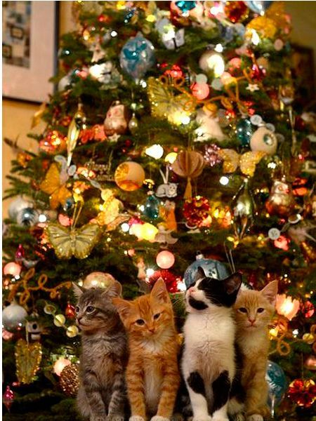Хорошо быть котом: потянулся – все умиляются и улыбаются, перевернулся с одного бока на другой – все умиляются и радуются, потолстел на 5 кг – все опять умиляются и фотографируют!
