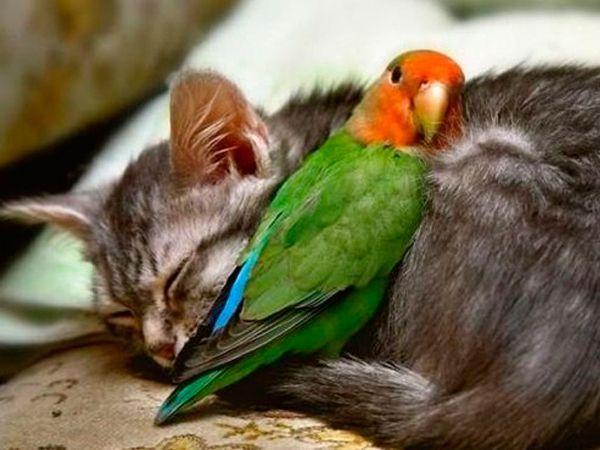 Спи, Мурзик, а я твой сон охранять буду!
