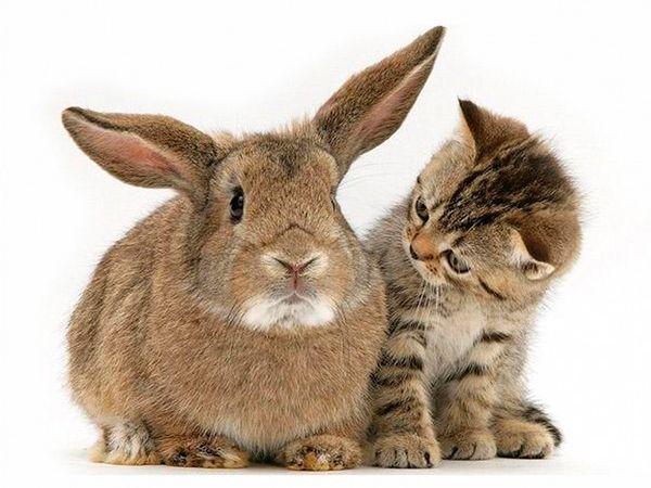 Какие у тебя большие уши!