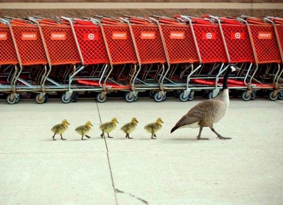 Семейный шоппинг.