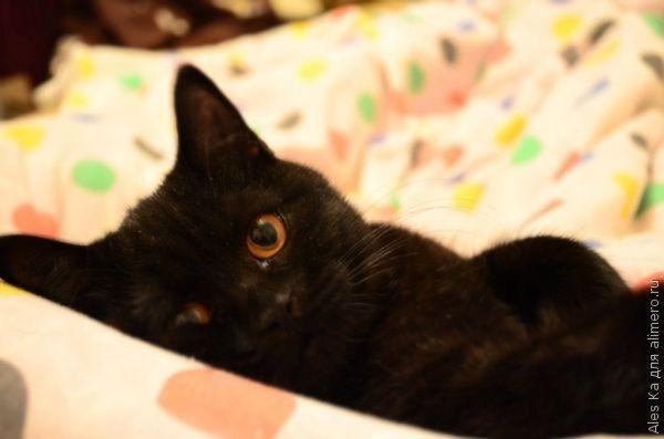 Как я отучила кошку спать на постели
