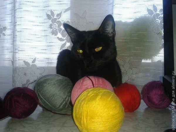 Как я кошку дрессировала