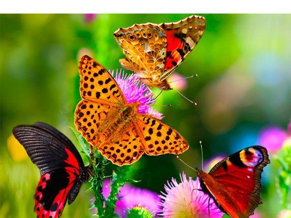 Хотите привлечь в свой сад больше пчёл и бабочек для опыления растений? Разместите перезревшие бананы, предварительно сделав в них небольшие дырочки, на некотором возвышении от земли, примерно чуть выше уровня головы.