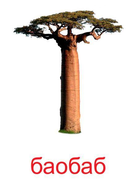 Карточки для изучения деревьев