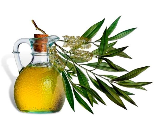 Отличным средством для воспаленной кожи является масло чайного дерева. Способ его применения очень прост: прыщи и угри смачивают несколько раз в день 5%-ным раствором масла. Эффект достигается уже через несколько дней.