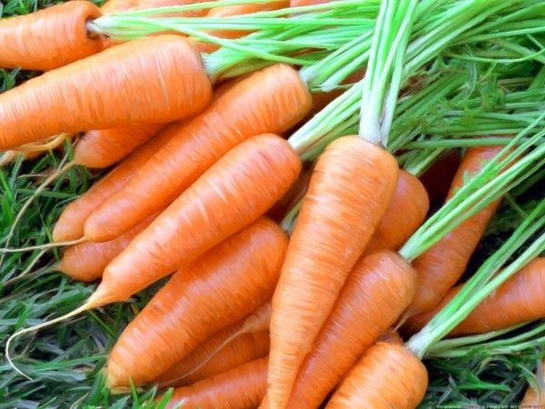 Увлажняющая морковная маска для сухой кожи лица. Морковное пюре или сок (2 столовые ложки) перемешать со сливками (чайной ложкой) и творогом (столовой ложкой).