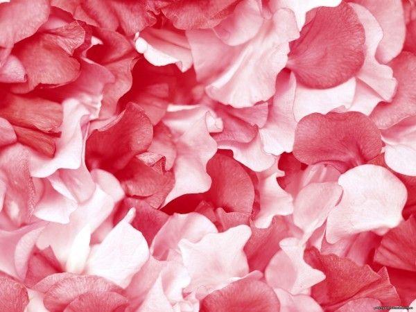 Маска из лепестков розы при раздраженной коже. Надо приготовить настой из лепестков розы, заправить его картофельным крахмалом, нанести еще теплым на лицо на 15 минут, после чего смыть.